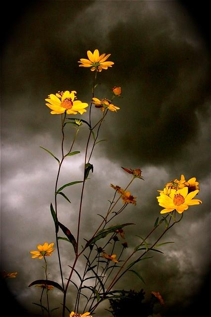 Image result for flowers in the storm