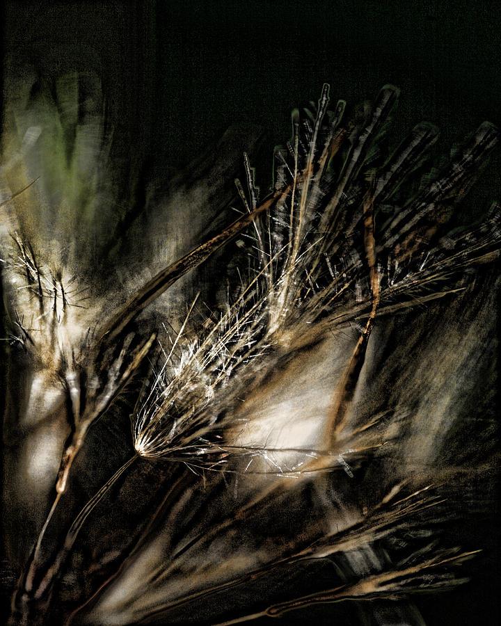 Wild Grasses Photograph - Wild Grasses by Bonnie Bruno