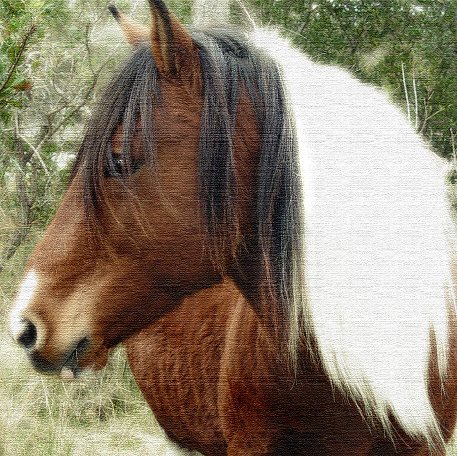 Wild Horse by Marilyn Marchant