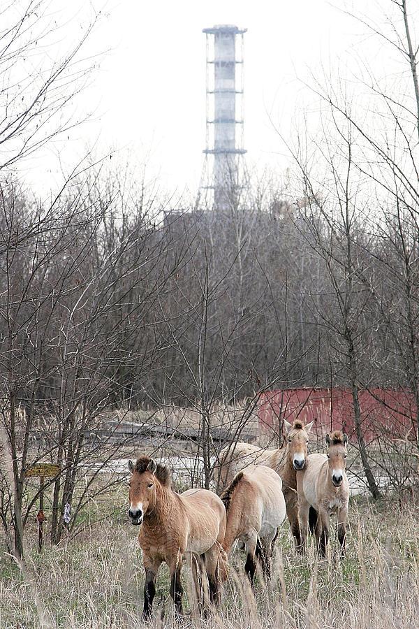 Mammal Photograph - Wild Horses Near Chernobyl by Ria Novosti