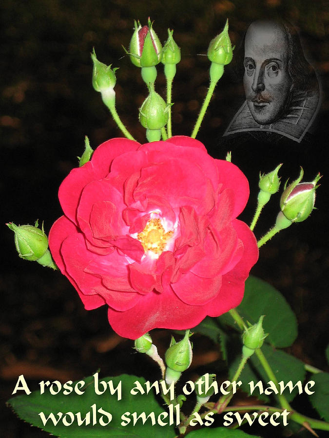 Rose Photograph - Wild Rose And The Bard by Terry Lynch