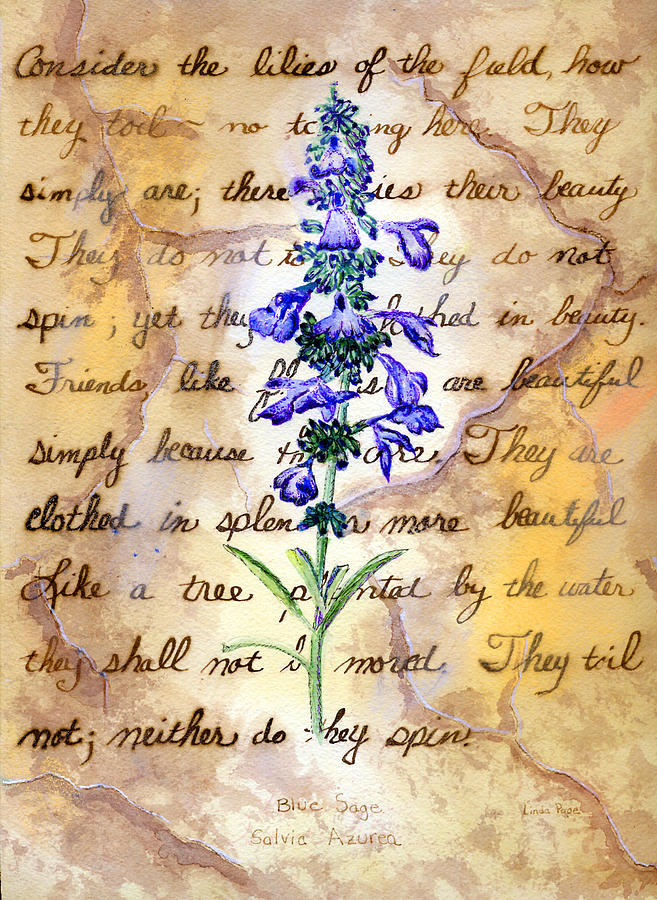 Flower Drawing - Wild Sage by Linda Pope