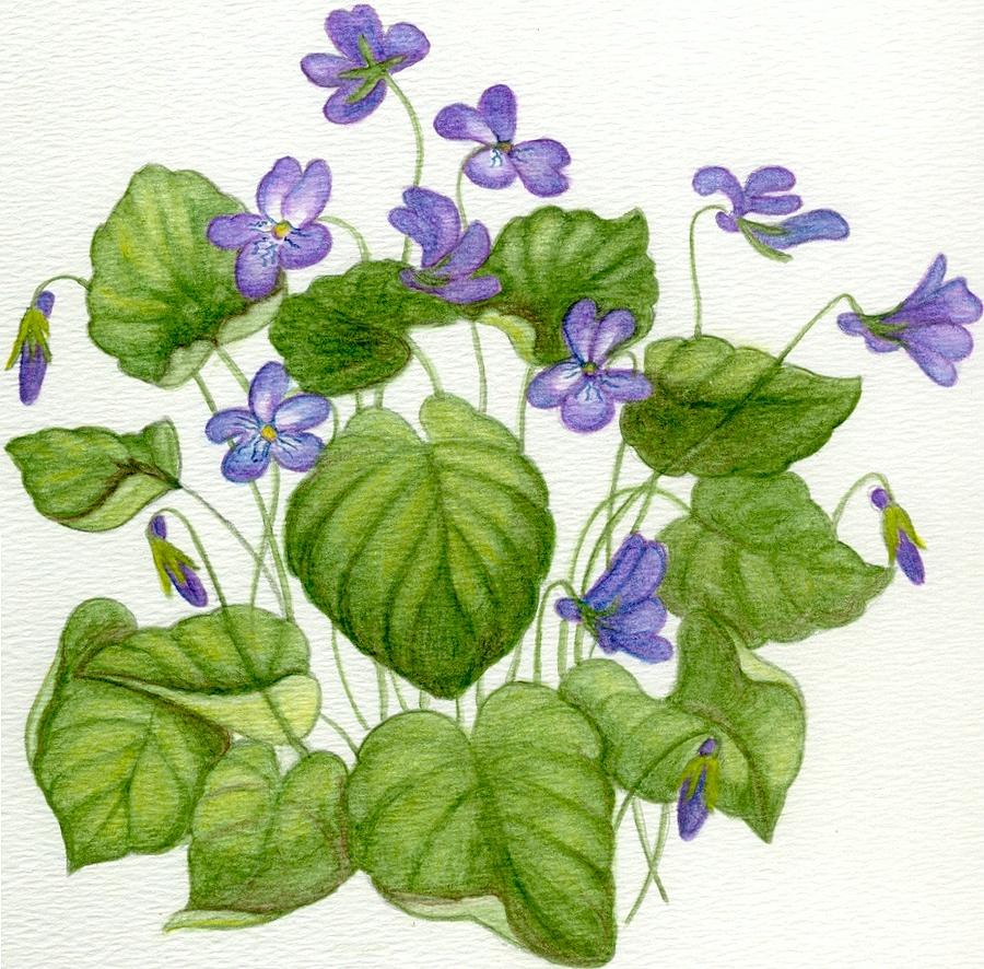 Wildflower Painting - Wild Violets by Becky Yates