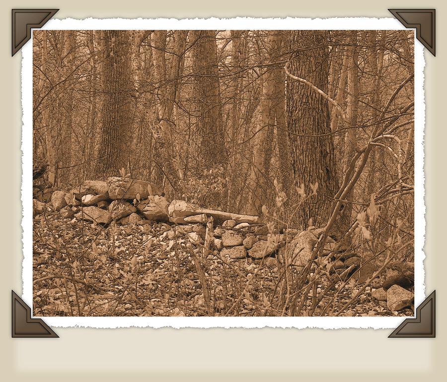 Wilderness by Robert Boyette