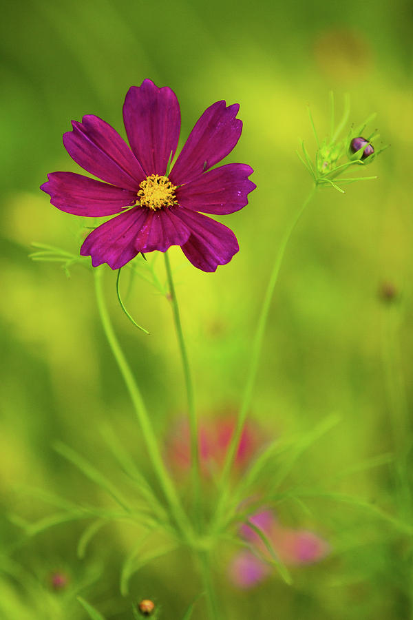 Vertical Photograph - Wildflower by Image by Rebecca Weaver, RWeaverNest Photography