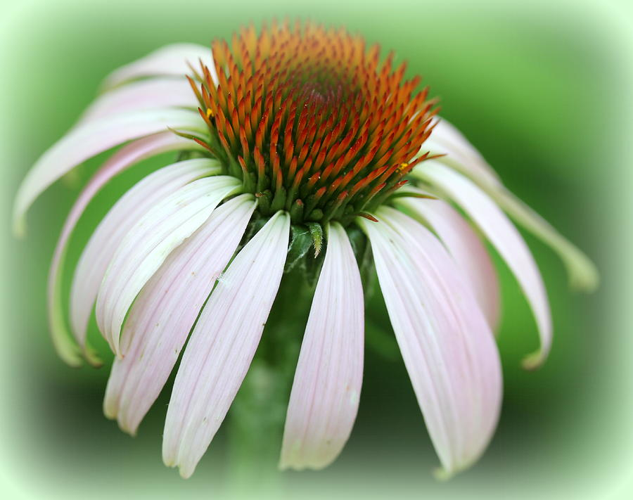 Summer Photograph - Wildflower In The Park by Maureen  McDonald