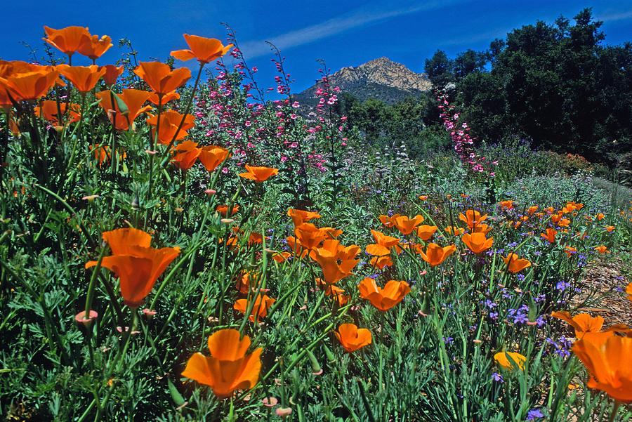 Landscapes Photograph - Wildflower Wonderland by Kathy Yates