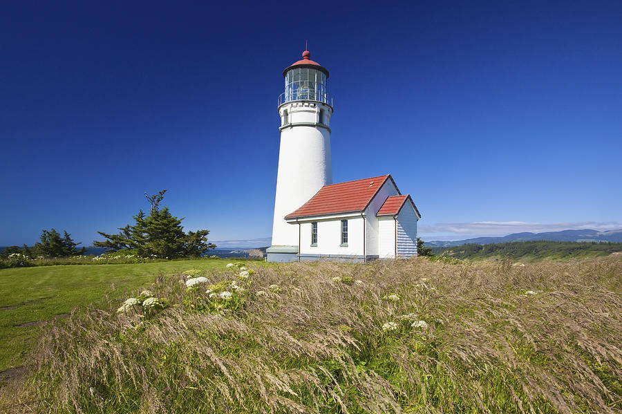 Lighthouse Photograph - Wildflowers And Cape Blanco Lighthouse by Craig Tuttle