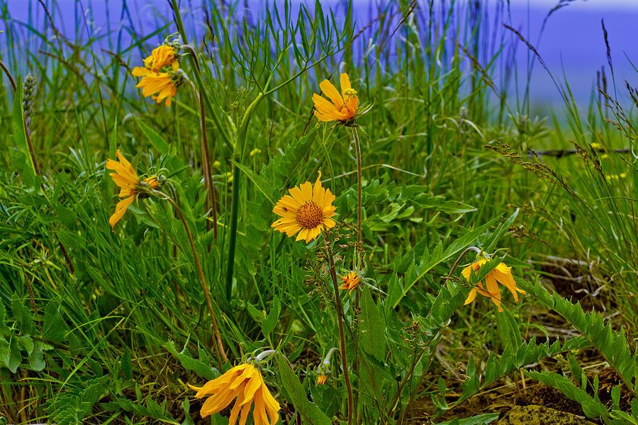 Eastern Oregon Photograph - Wildflowers by Jen TenBarge
