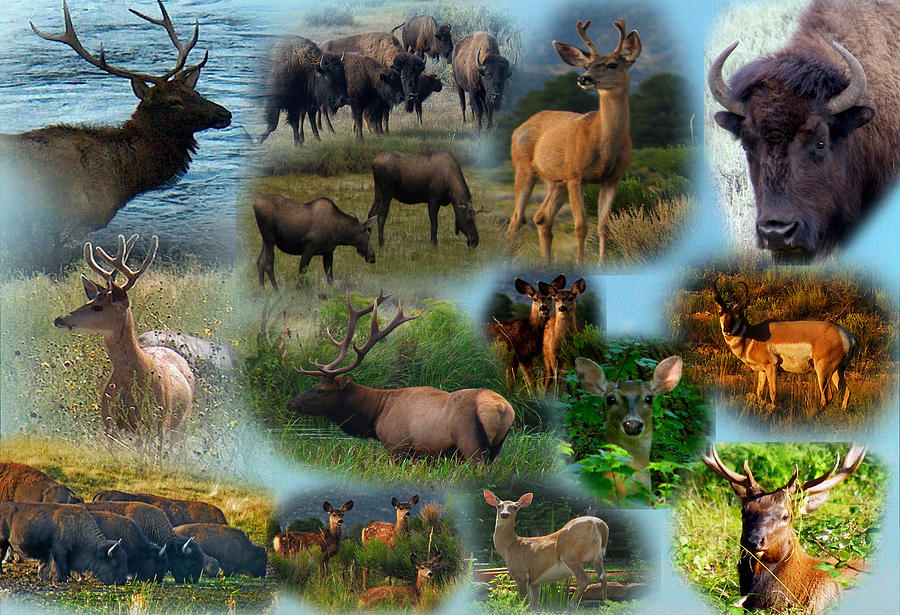 Wildlife Collage Photograph By J D Whaley