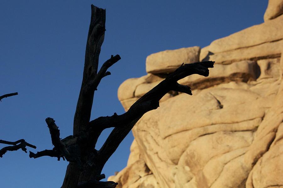 Dead Trees Photograph - Will Desert Give Life by Carolina Liechtenstein