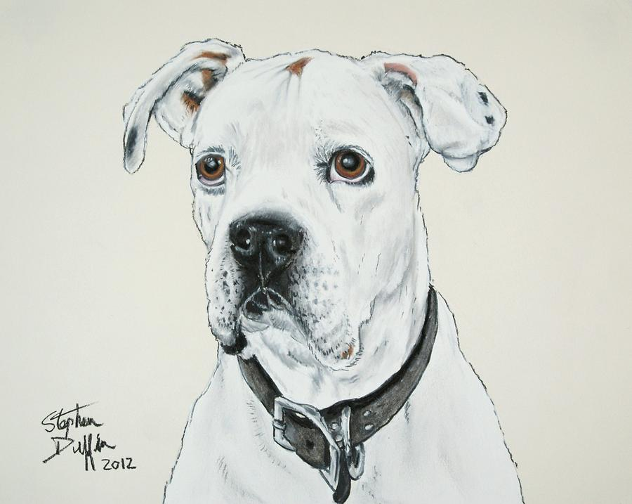 Boxer Pastel - Will You Love Me... by Stephen Duffin