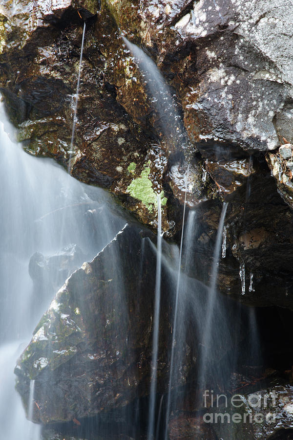 Biodiversity Photograph - Willey Brook - White Mountains New Hampshire  by Erin Paul Donovan