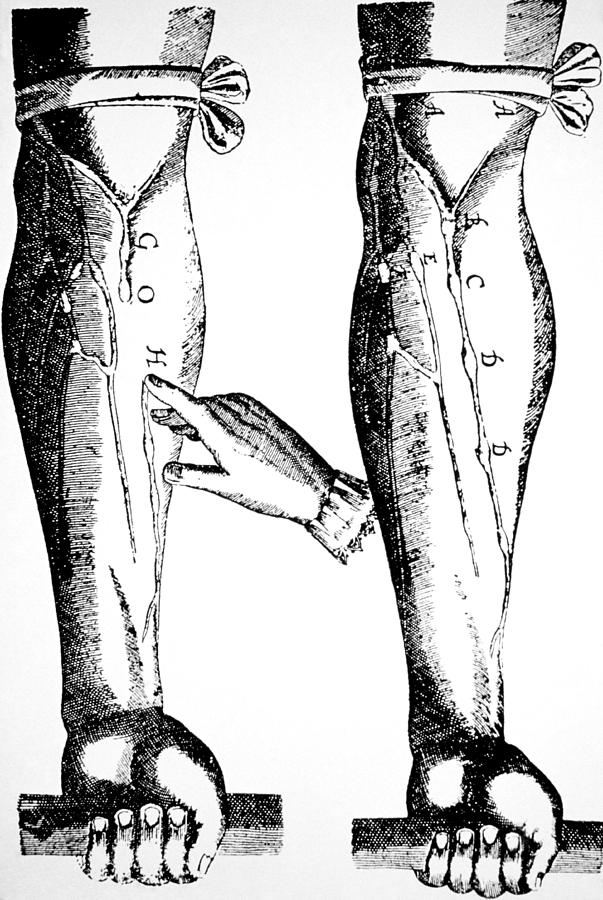William Harvey Woodcut Showing Venous Valves Photograph by .