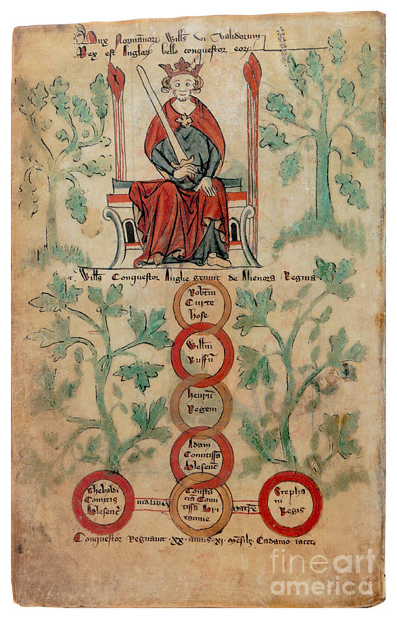 Genealogy Photograph - William The Conqueror Family Tree by Photo Researchers