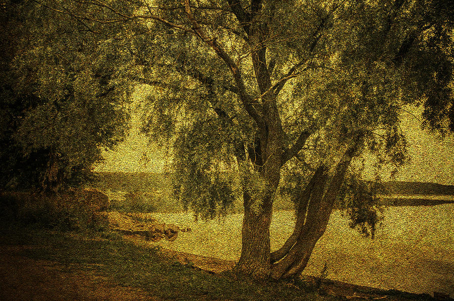 Tree Photograph - Willow At The Lake. Golden Green Series by Jenny Rainbow