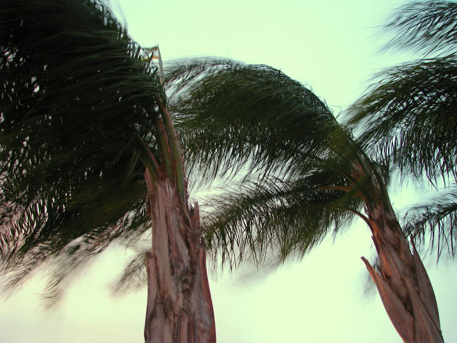 Palms Photograph - Wind Blown by T Guy Spencer