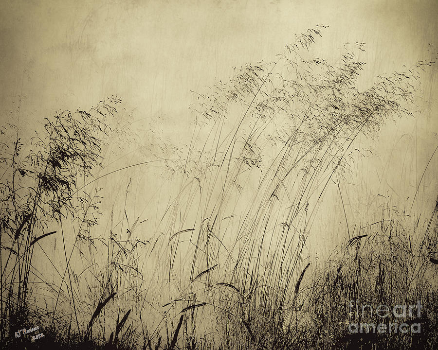 Grass Photograph - Windblown by Arne Hansen
