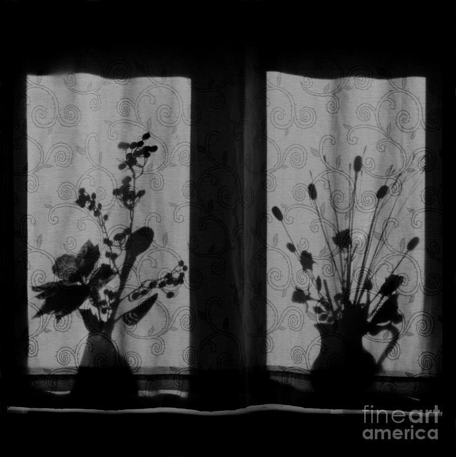 Flowers Photograph - Window Shadow 2 by Aldo Cervato