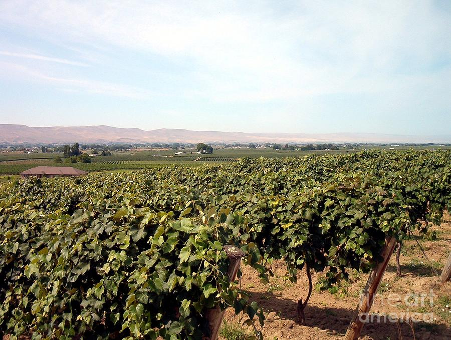Wine Country Photograph - Wine Country by Charles Robinson