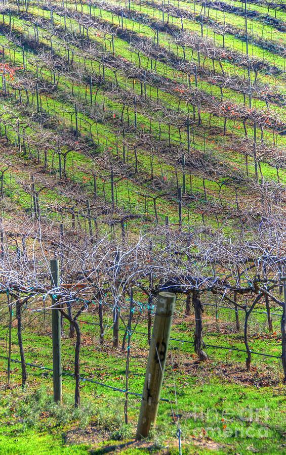 Winery Photograph