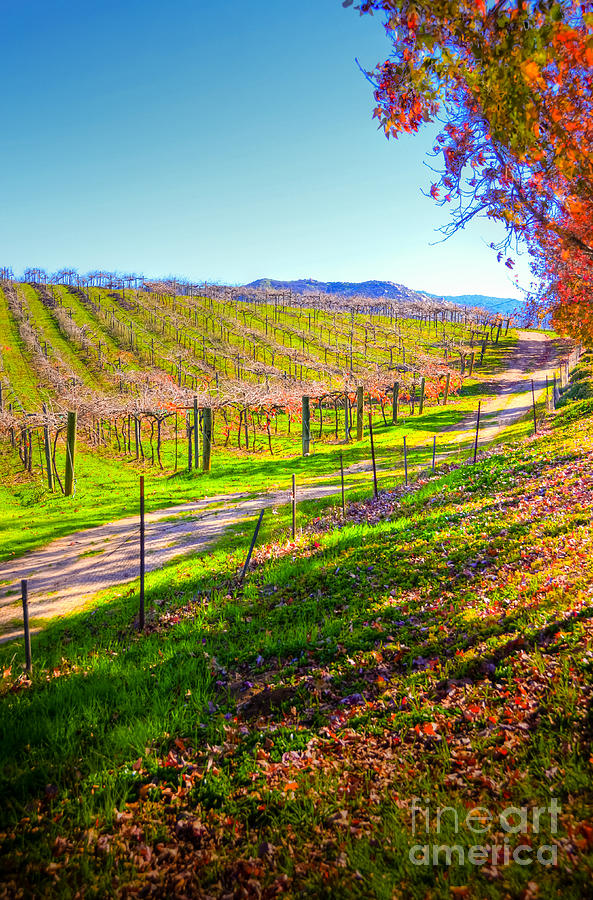 Winery Photograph - Winery Road by Kelly Wade