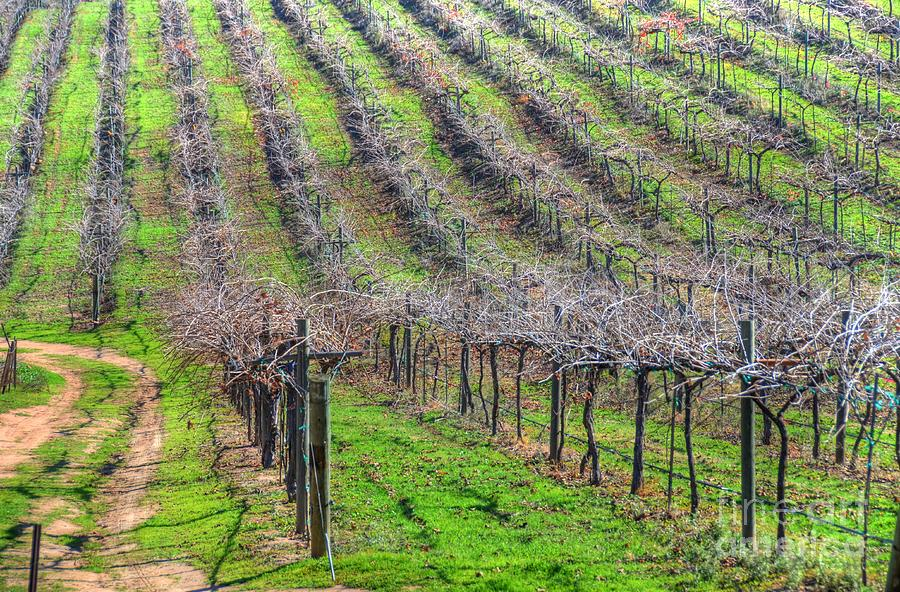 Winery Photograph - Winery Vineyard by Kelly Wade