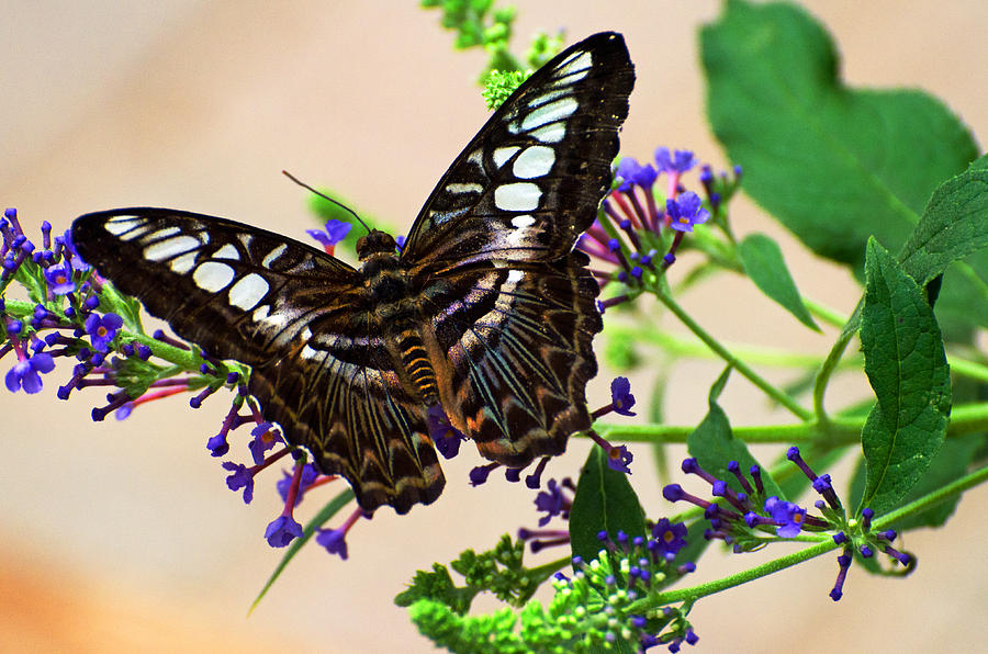 Butterfly Photograph - Wing Of Beauty by Cheryl Cencich