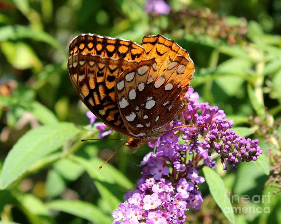 Orange Butterfly Photograph - Wings Aglow by Theresa Willingham