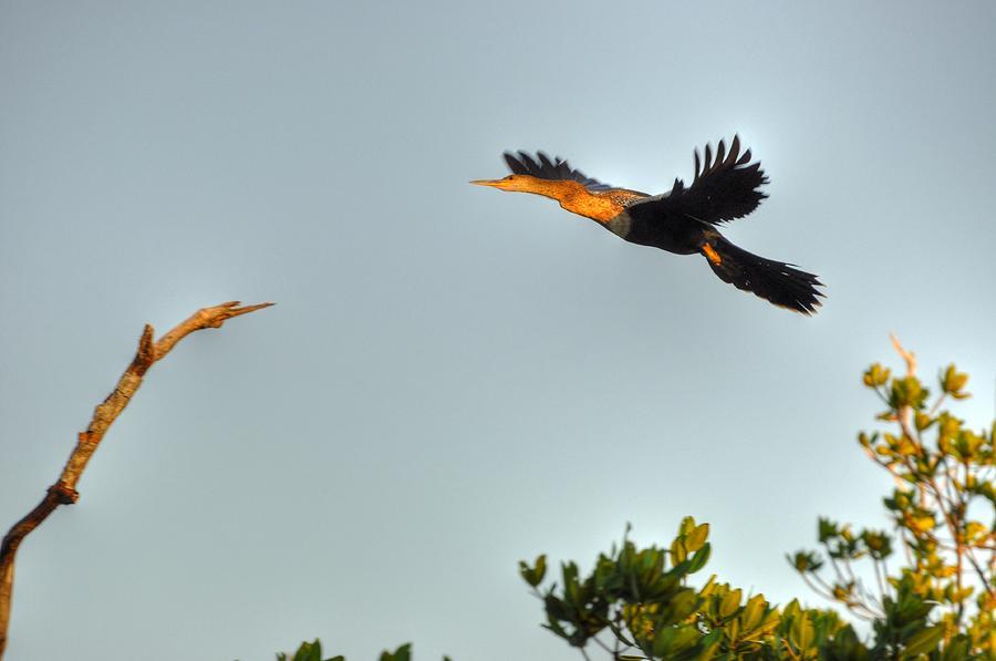 Great Blue Heron Digital Art - Wings by Barry R Jones Jr