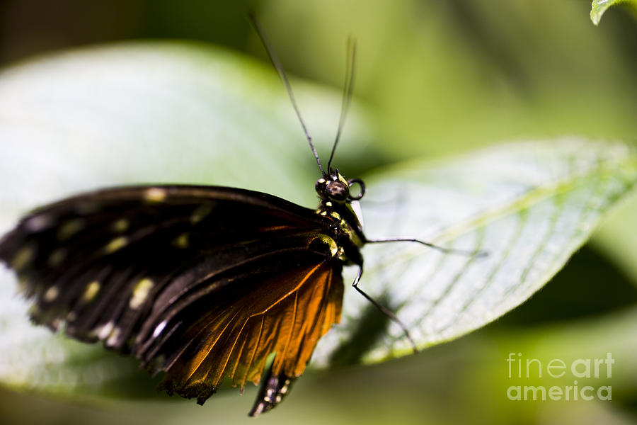 Butterfly Photograph - Wings by Leslie Leda