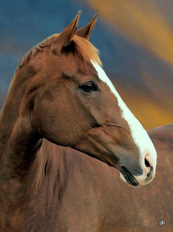 Horse Photograph - Winners Circle by Irma BACKELANT GALLERIES