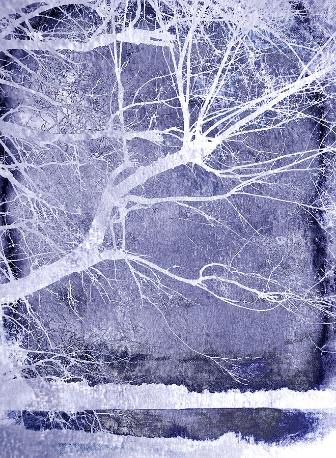 Abstract Tree Photograph - Winter Blues by Ann Powell