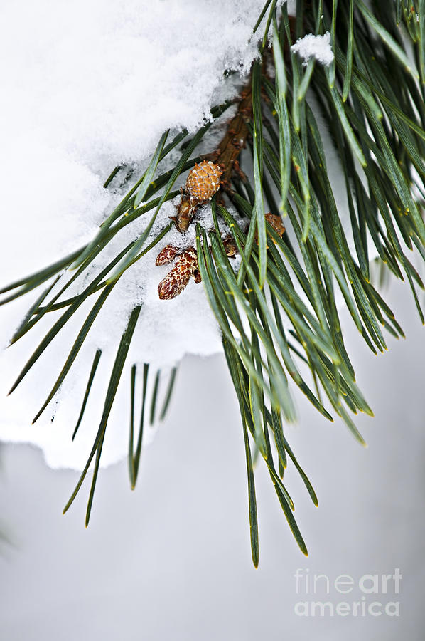 Winter Photograph - Winter Branches by Elena Elisseeva
