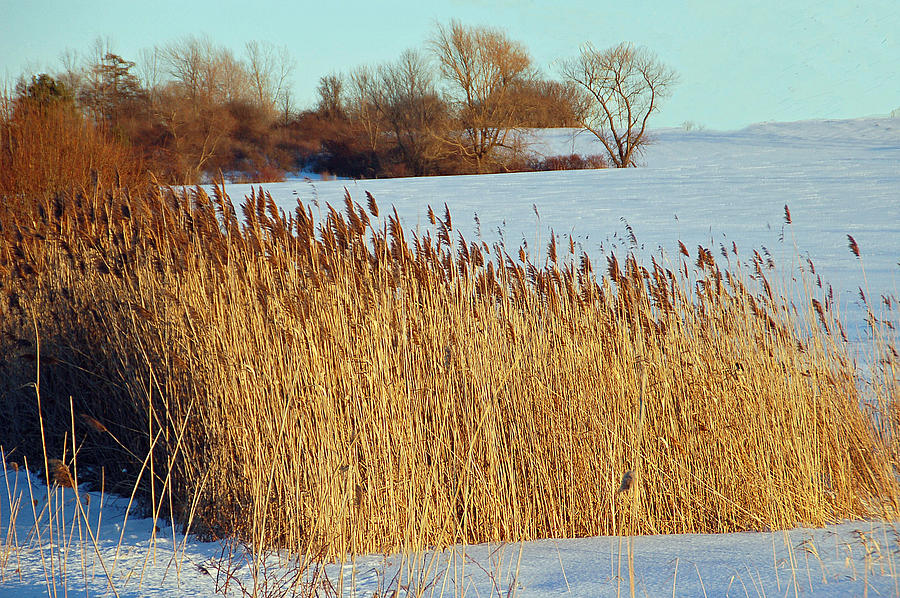 Landscape Photograph - Winter Breeze by Aimee L Maher Photography and Art Visit ALMGallerydotcom