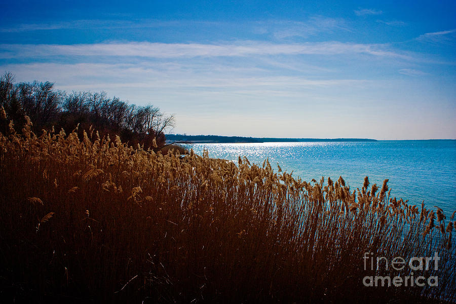 Winter Photograph - Winter Breeze by Lisa Holmgreen