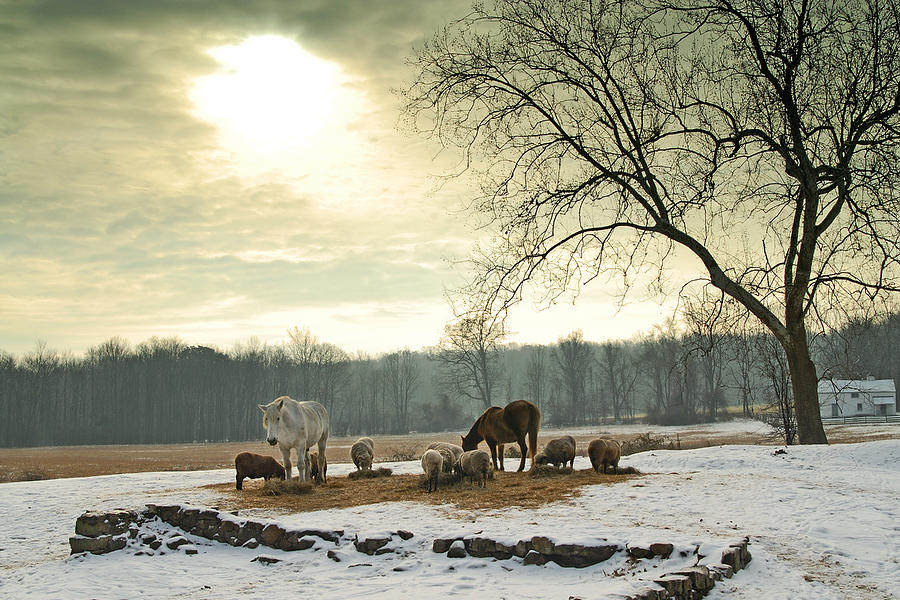 Winter by Craig Leaper