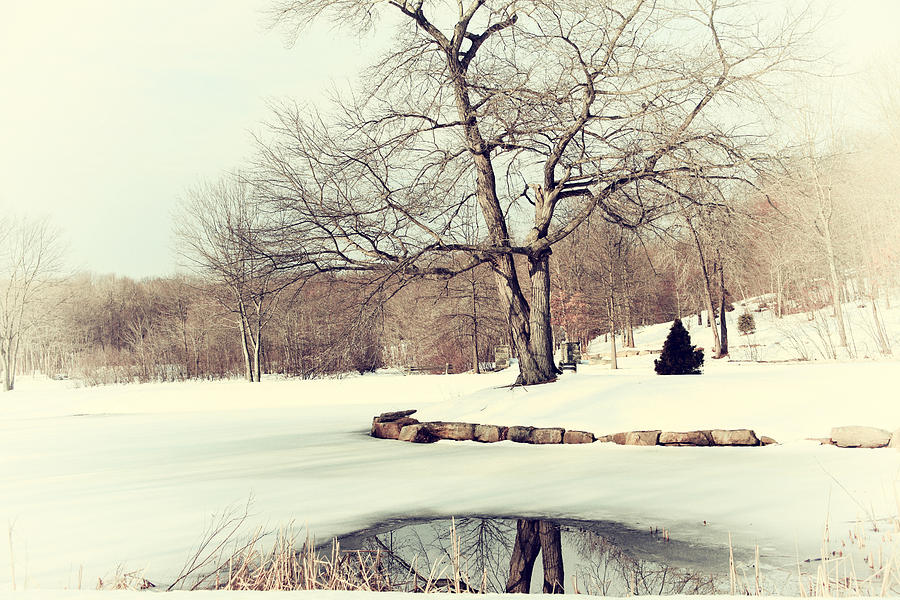 Winter Photograph - Winter Day In The Park by Karol Livote