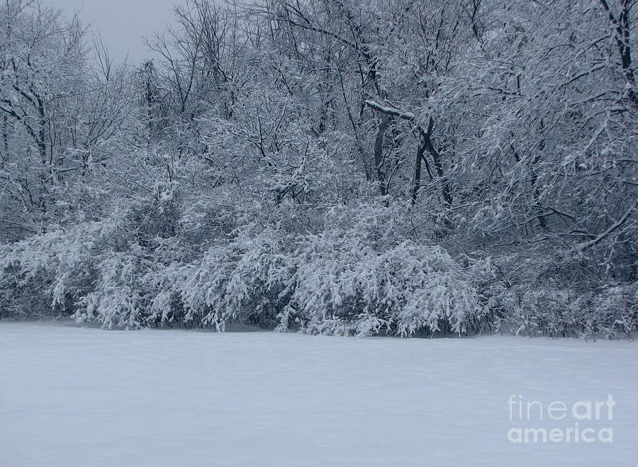 Landscape Photograph - Winter Delight by Cedric Hampton