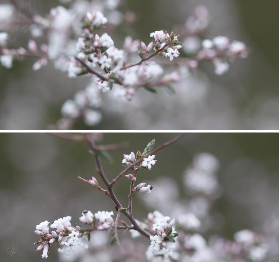 Flowers Photograph - Winter Diptych by Margaret Hormann Bfa