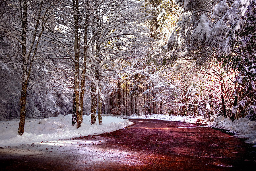Winter Scene Photograph - Winter Drive by Anthony Citro