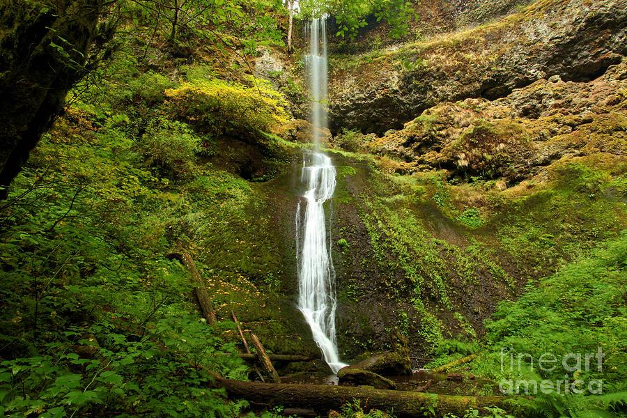 Winter Falls Photograph - Winter Falls by Adam Jewell