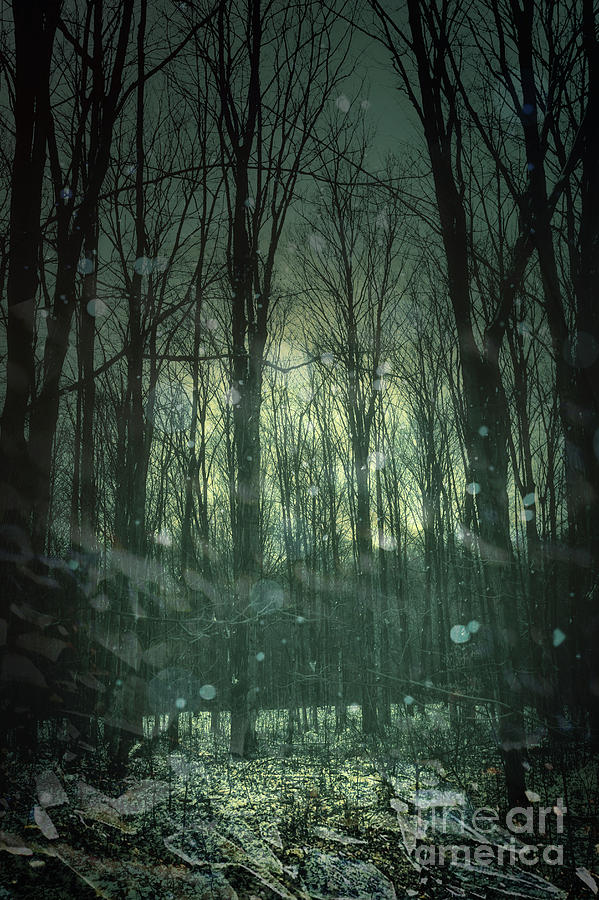Atmospheric Photograph - Winter Forest At Twilight by Sandra Cunningham