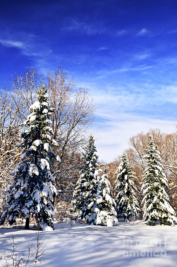 Winter Photograph - Winter Forest Under Snow by Elena Elisseeva