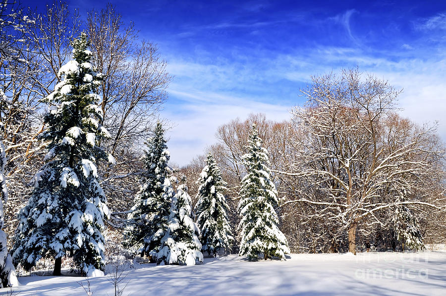 Winter Photograph - Winter Forest With Snow by Elena Elisseeva