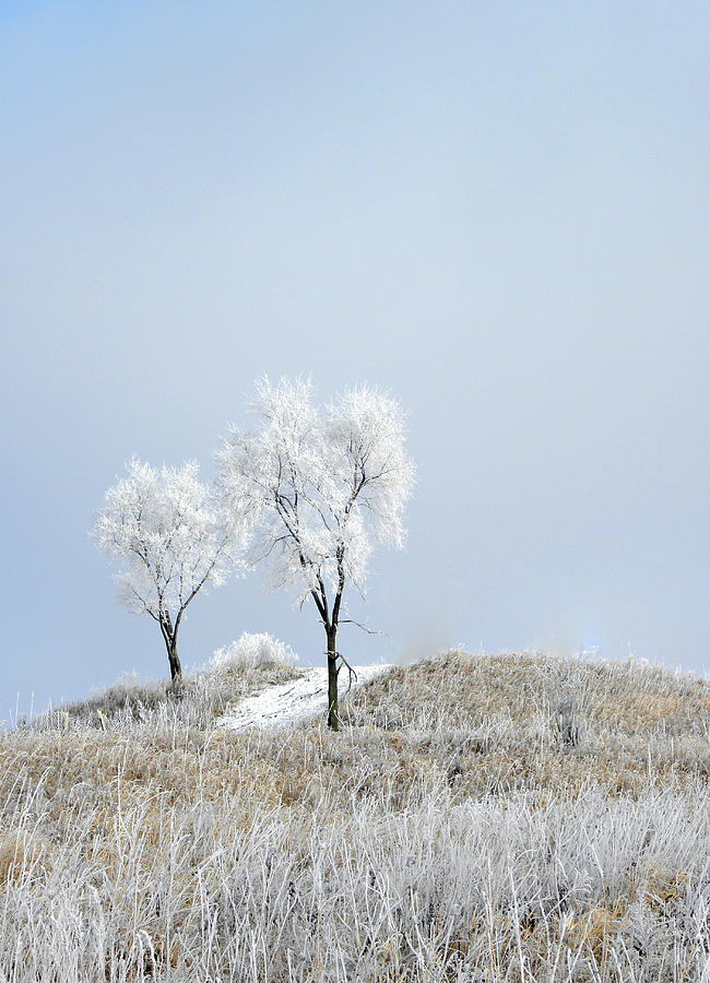 Snow Photograph - Winter Frost by Julie Palencia