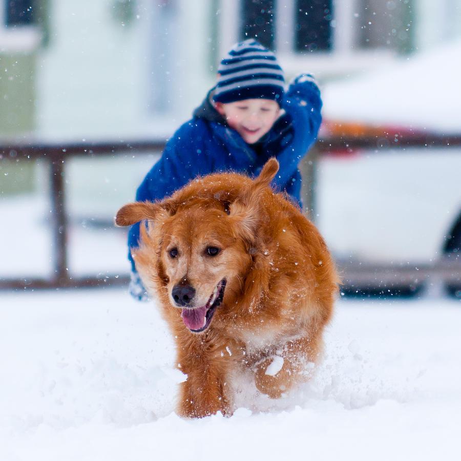 Dog Photograph - Winter Fun by Matt Dobson