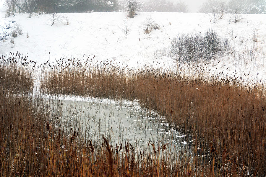 Winter Photograph - Winter Gold by Terence Davis