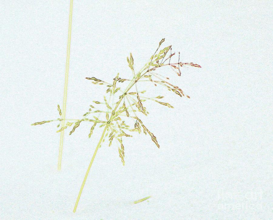 Abstracts Photograph - Winter Grass by Roland Stanke