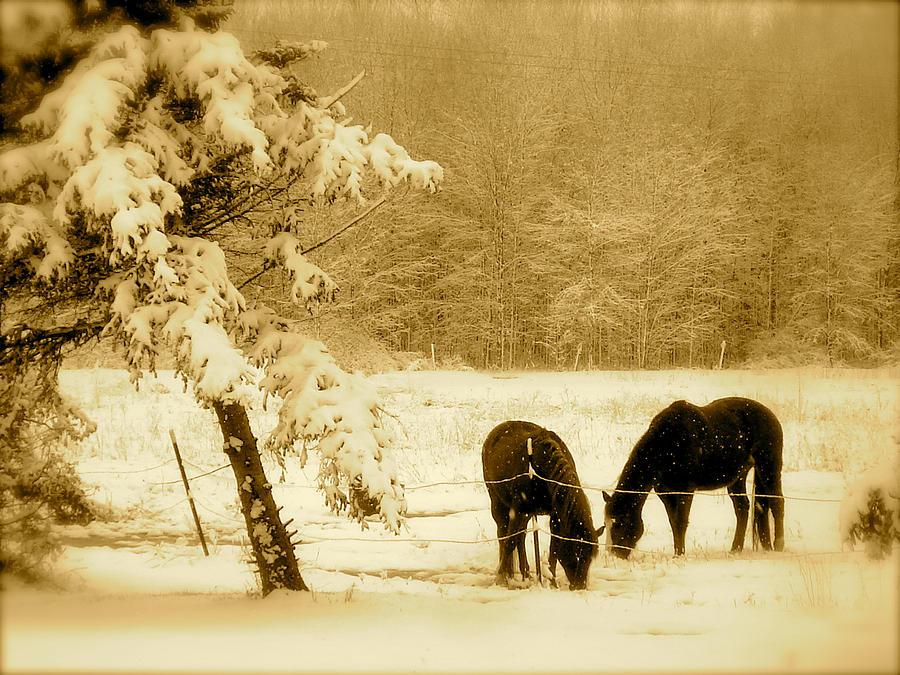 Landscape Photograph - Winter Grazing by Arthur Barnes
